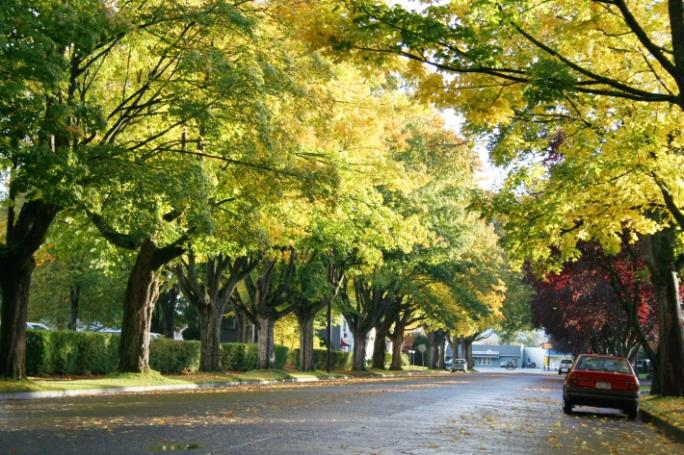 Neighborhood Street Lined with Dense Trees