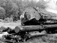 Historic photo of lumber